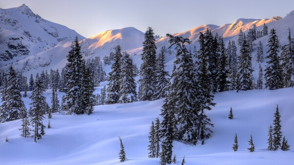 Desktop HD Wallpaper Winter Trees Snow Mountains Slopes