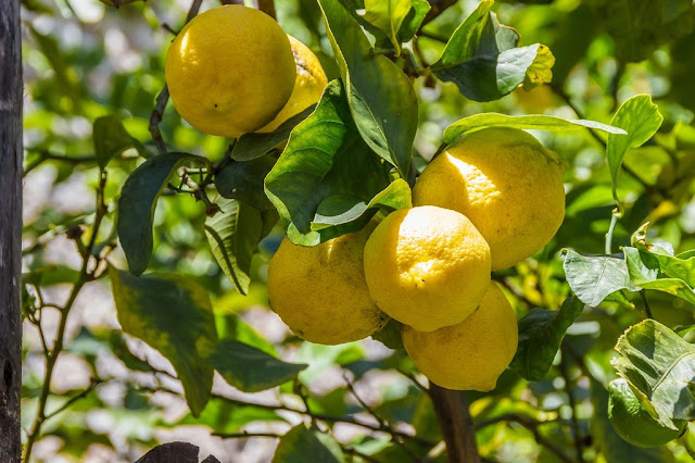 People use lemon for many health problems. It is a cure for many diseases since ancient times.
