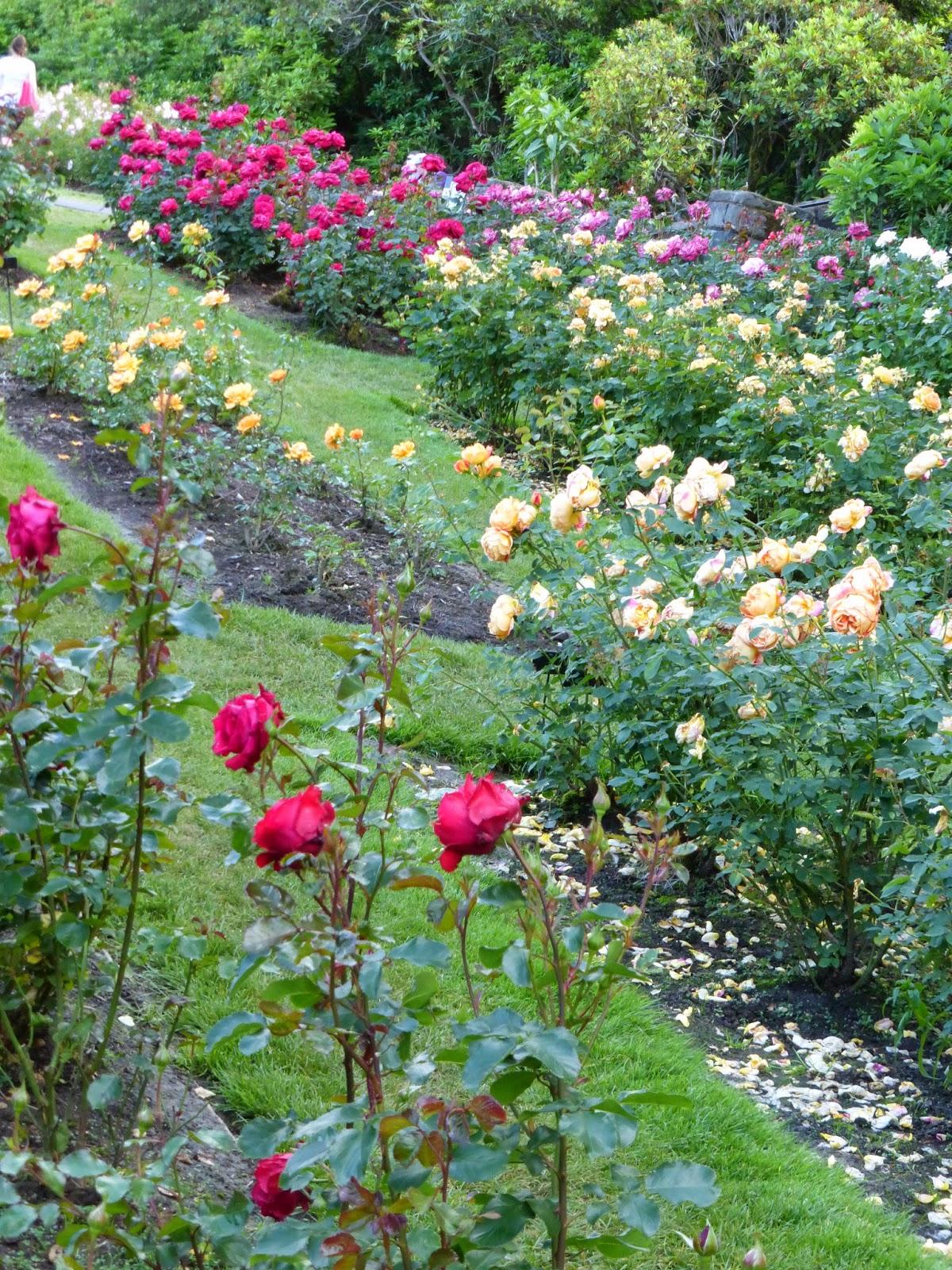 Pillsbury Press International Rose Test Garden Portland Or