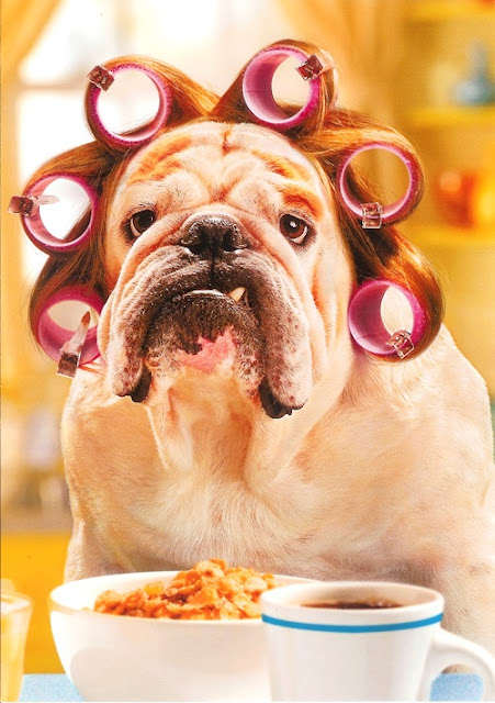 Hilarious Good Morning Dog Curlers Picture