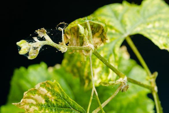 Méthodes de lutte contre les ravageurs chez les plantes