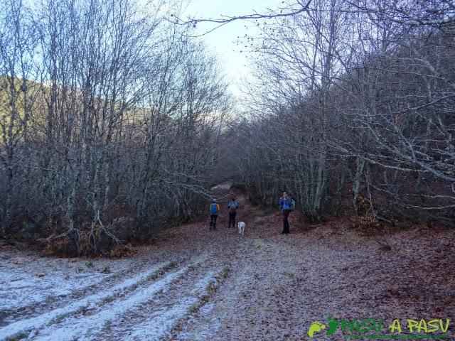 Bosque en el Valle Pinzón
