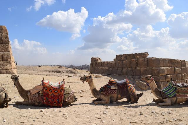 camel riding vegan