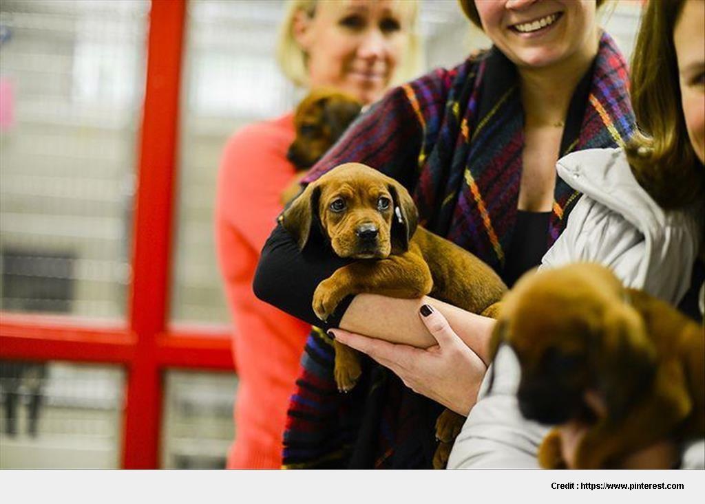 Adopt A Pet Nashville