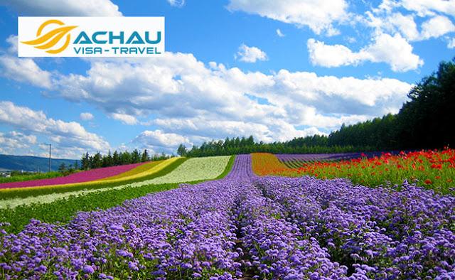Lý giải vì sao nên đi du lịch Nhật Bản vào mùa hè?1