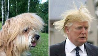 los dobles de los famosos - humor - trump