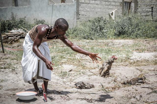 ガーナ 生贄 犠牲 鶏 Ghana sacrifice