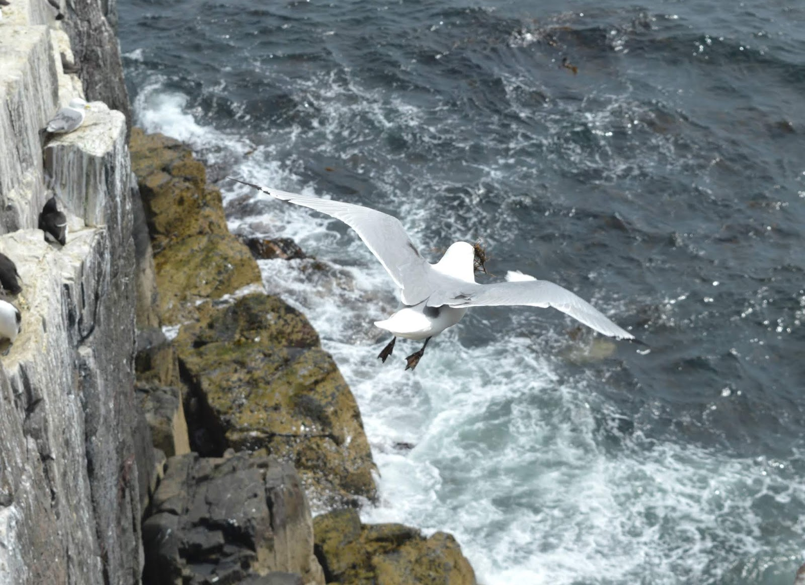 Farne Islands Serenity Boat Tours
