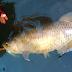 Para Penjaga Batas Negeri: Kisah Tentang Ikan-ikan, Suku Yee, Tentara, dan Para Pemancing di Perbatasan RI – PNG (Bagian 3)