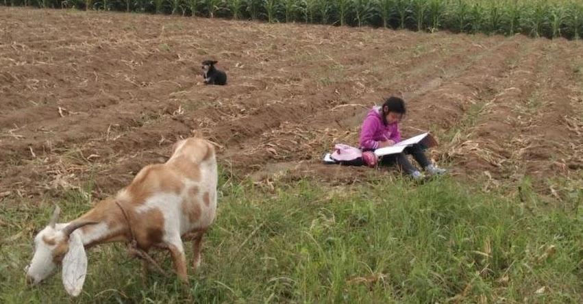 Niña que estudia mientras cuida a sus animales en una chacra de Trujillo, conmueve las redes sociales