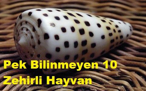 Pek Bilinmeyen 10 Zehirli Hayvan