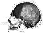 Sagittal section of skull