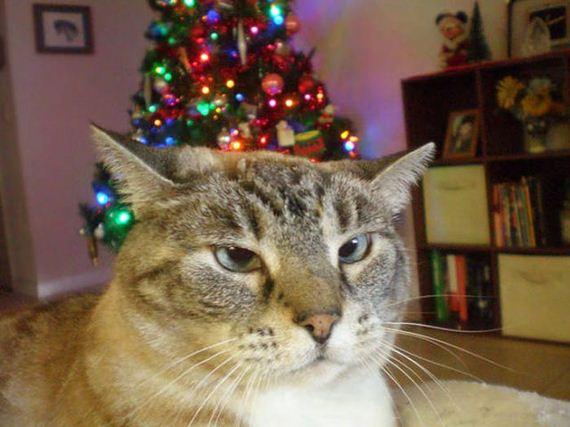 Divertidas fotos de animais de estimação que não entraram no clima do Natal