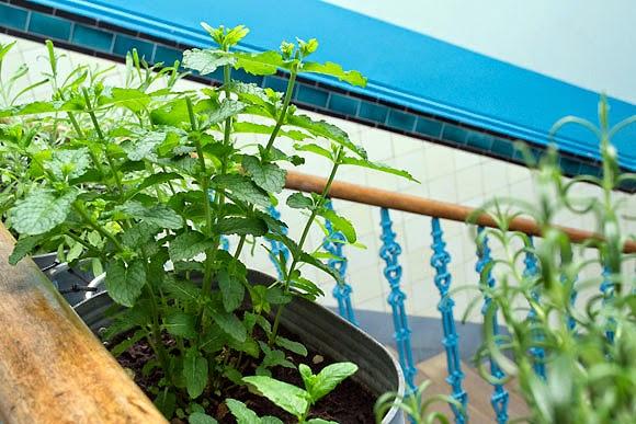 Stairwell herb garden
