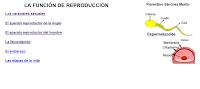 https://cplosangeles.educarex.es/web/edilim/tercer_ciclo/cmedio/las_funciones_vitales/la_funcion_de_reproduccion/index.html