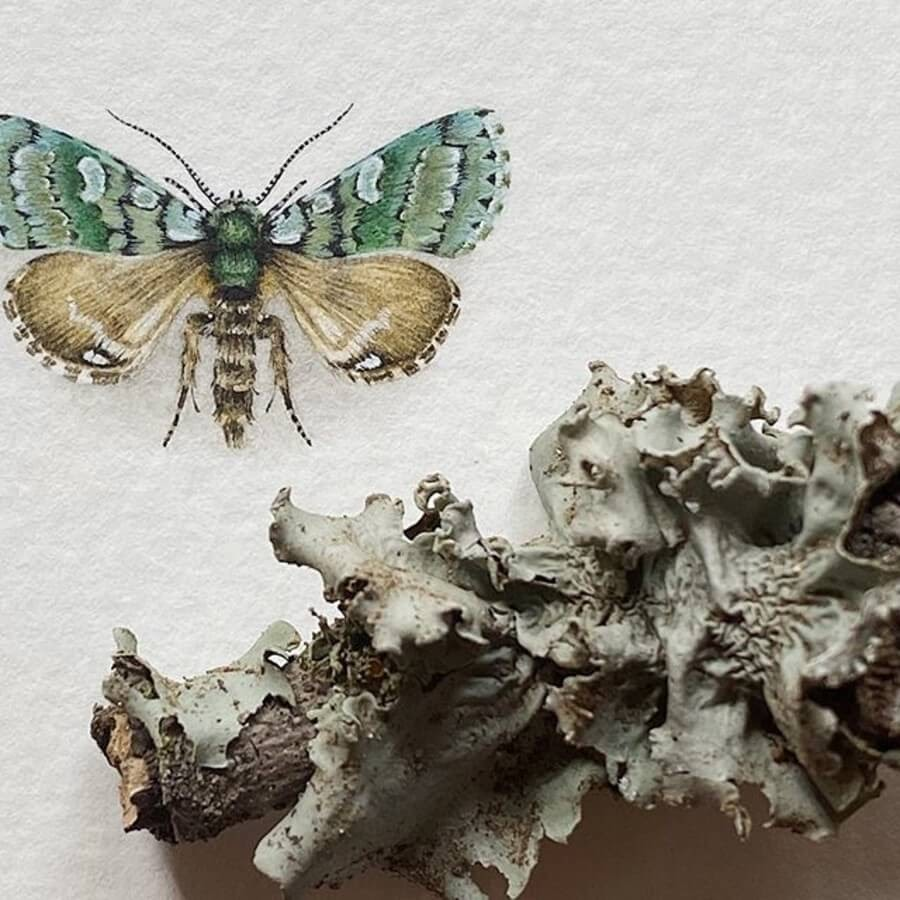 03-Moth-Griposa-Aprilina-Lorraine-Loots-Tiny-Art-www-designstack-co