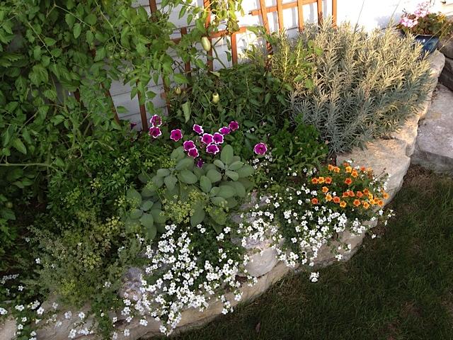 Piante Balcone Est : Giardinaggio urbano coltivare sul balcone o terrazzo