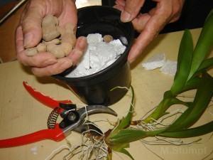 Aprenda a fazer transplante da sua orquidea