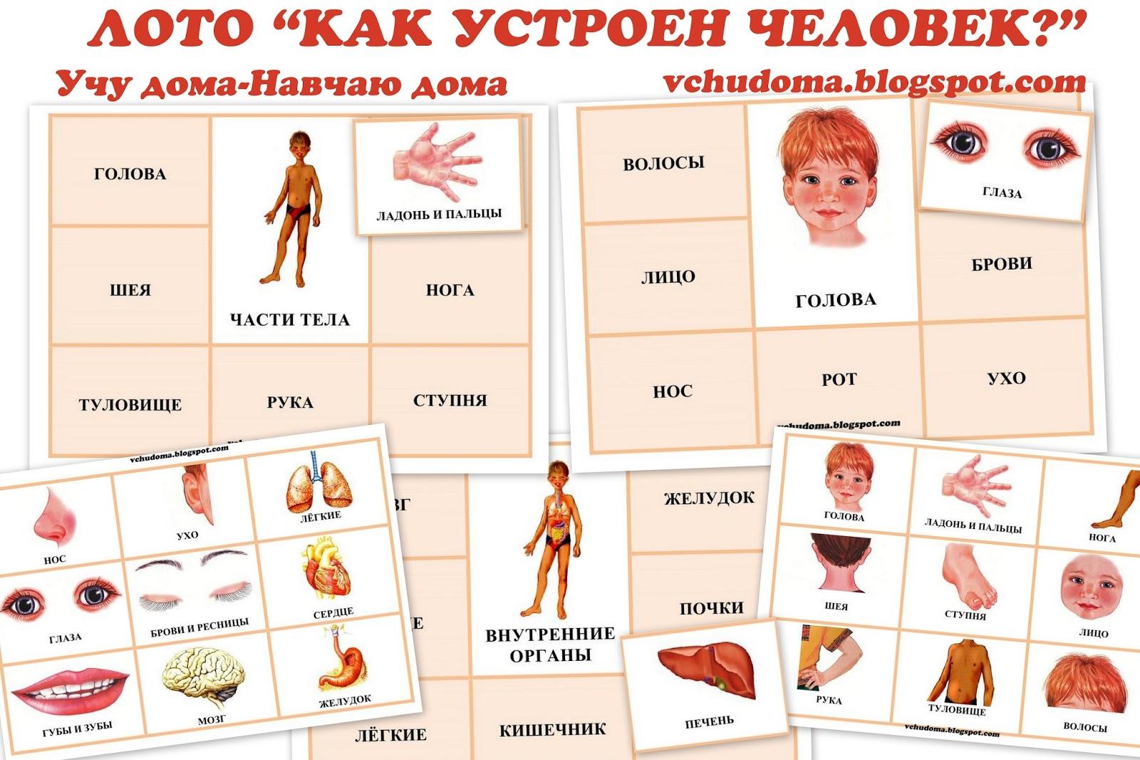 Картинки на тему части тела человека