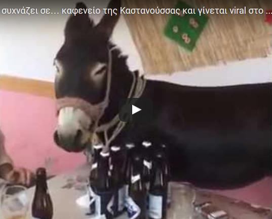Γάιδαρος συχνάζει σε… καφενείο της Καστανούσσας και γίνεται viral στο διαδίκτυο video