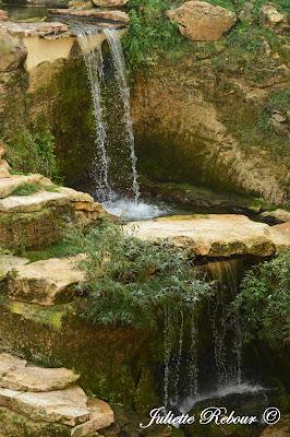 Volière Amérique du Sud, Bioparc Doué-la-Fontaine