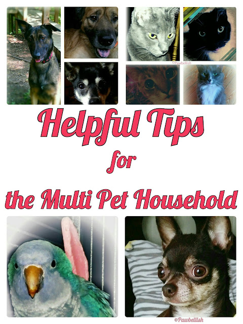 Helpful Tips for the Multi Pet Household | Pawbellish | Tips and ideas to making living with multiple dogs and  cats more enjoyable.