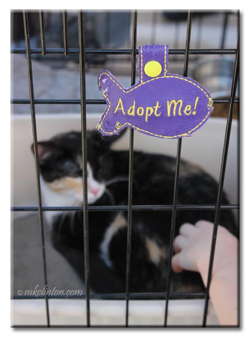 Cat waiting for adoption