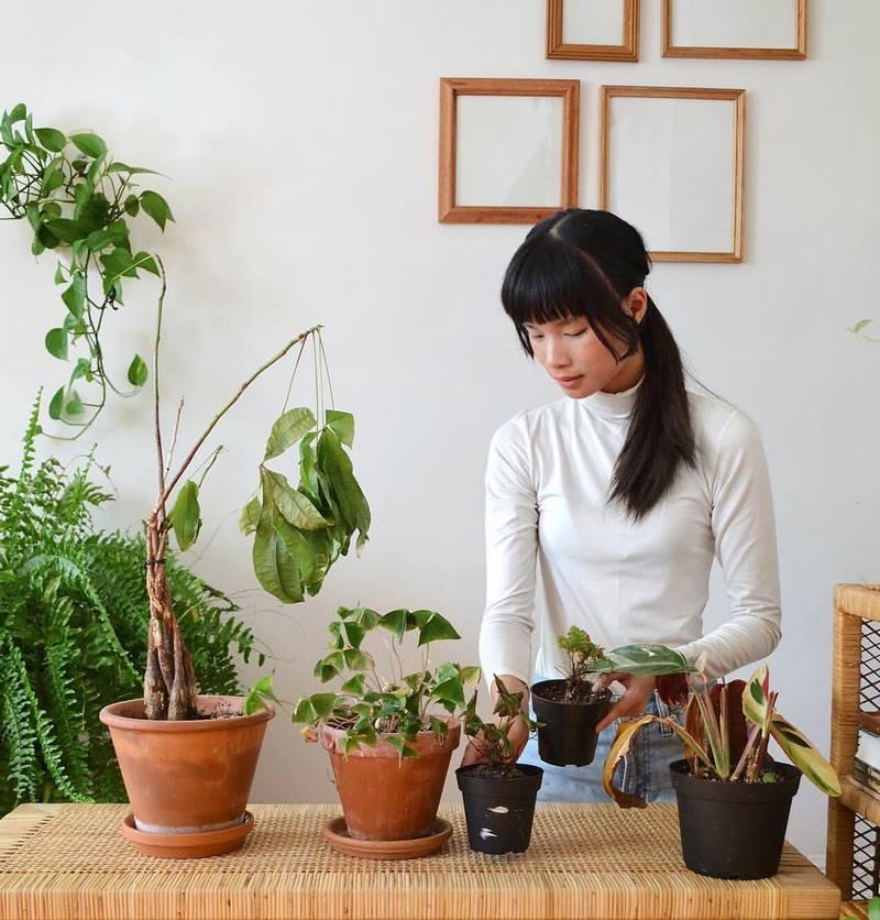macetas con plantas verdes en interior de casa