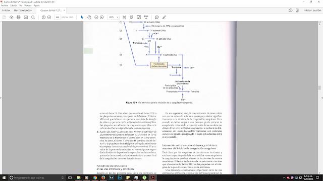 Descargar Fisiologia Guyton y Hall PDF Edición 12