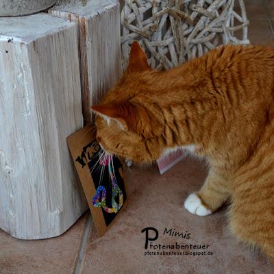 Katze Mimi beschnuppert eine Katzenkarte