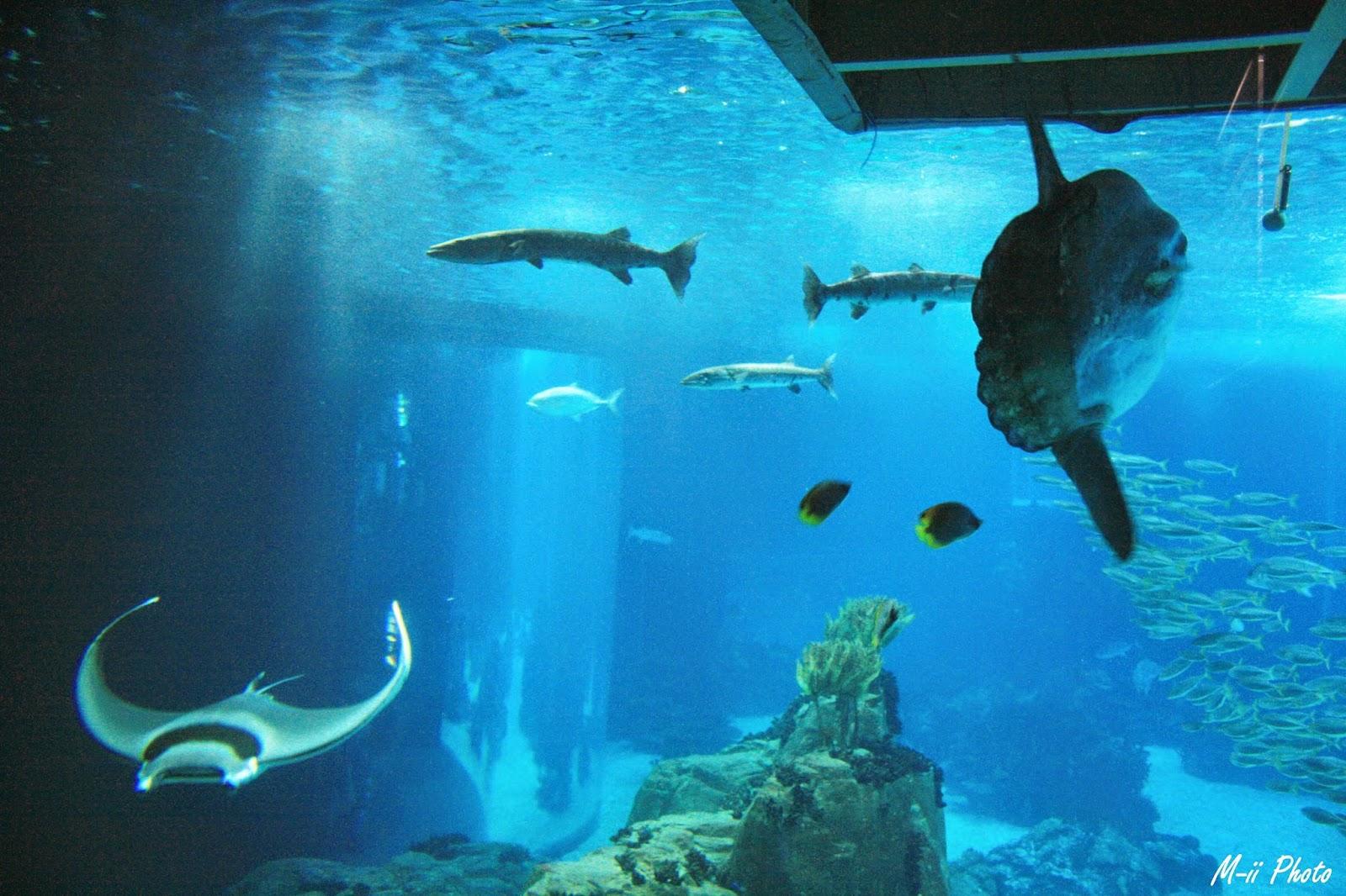 M-ii Photo : 10 choses à faire à Lisbonne Aquarium de Lisbonne