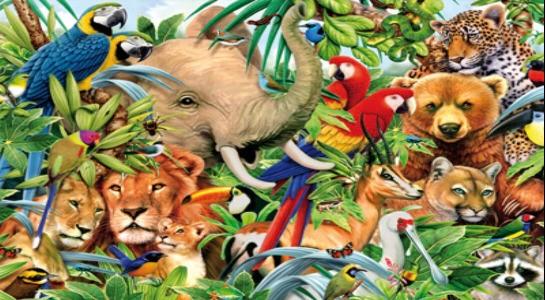 la fauna animal
