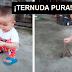Niños que alimenta a pajarito con sus propias manitos enamora a internautas