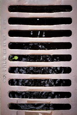 Reto 52 semanas - semana 24 - Verde