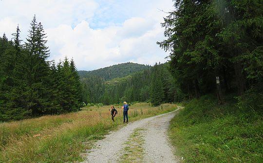 Dolina Malé Zajfy.
