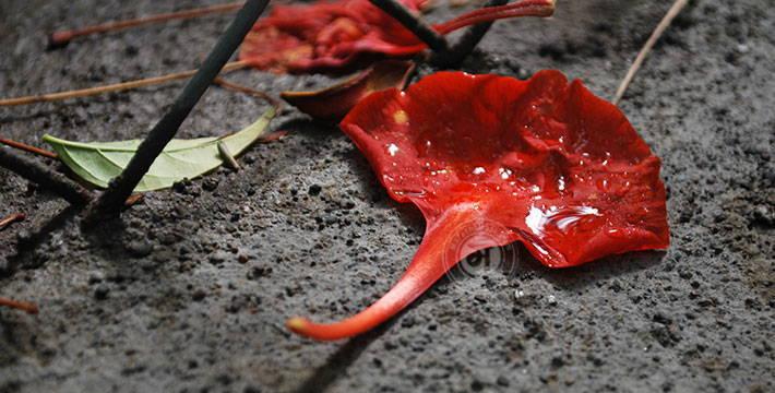 माझा पाऊस - मराठी कविता | Majha Paus - Marathi Kavita