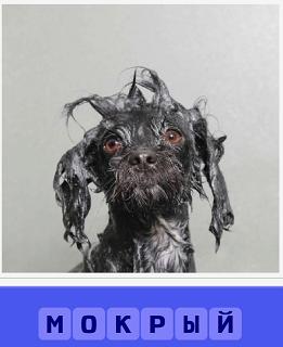 сидит мокрая собака, вся шерсть вымокла и висит в разные стороны