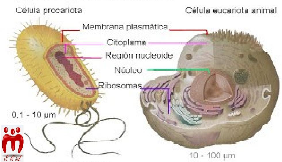 Erika Rojas Portilla Citología O Biología Celular