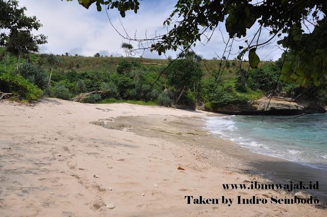 wisata tulungagung pantai wedi putih