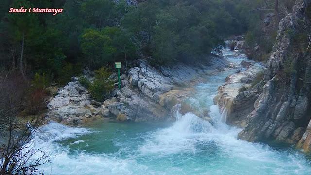 Truchas, río Borosa, Pontones, Sierra de Cazorla, Jaén, Andalucía