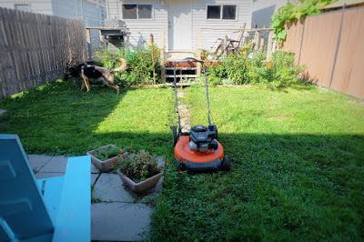 weeds grass backyard before dog