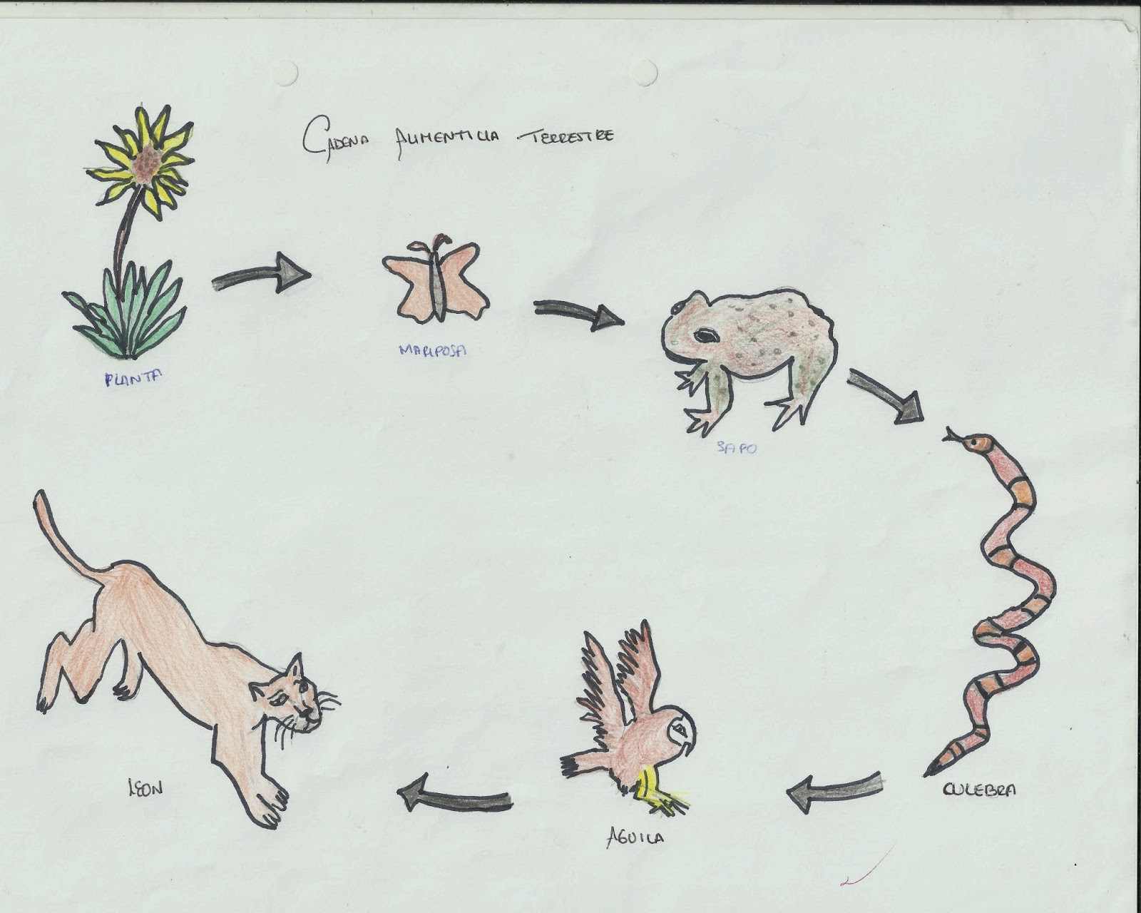 Cadenas Alimenticias Para Colorear Dibujos Para