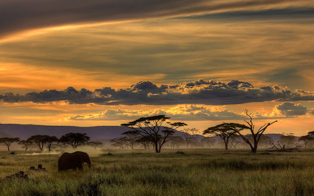 Africa by Amnon Eichelberg - L'Afrique