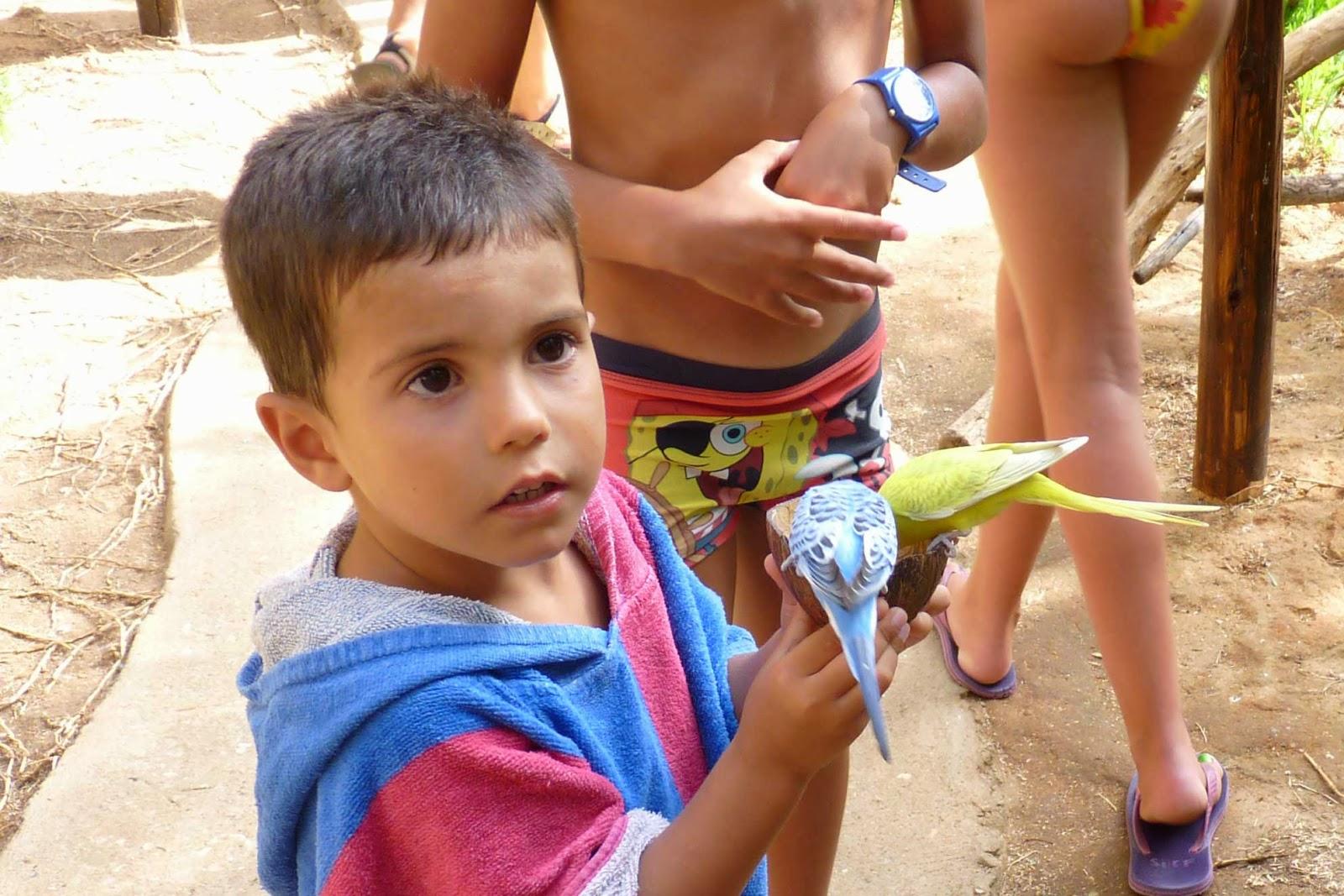 Krazy World, Joel alimentando a los periquitos.