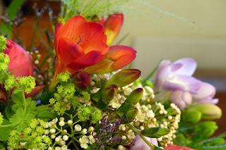Bunga Freesia gambar