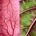 Estudo apresenta regeneração do tecido cardíaco com folha de espinafre