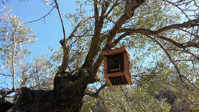 Caja nido para párido