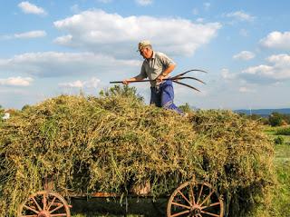 Τσουχτερά πρόστιμα σε αγρότες με αδήλωτους εργάτες και μη τήρηση βιβλίων.