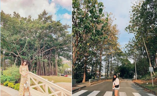Vì có không gian ngoài trời thoáng đãng, mát mẻ, công viên rất thích hợp cho những buổi picnic, đi dạo ngắn. Nơi này cũng thường xuyên là địa điểm được chọn để tổ chức các sự kiện về âm nhạc và biểu diễn lớn. Nếu là một du khách thích tìm những điểm mới lạ để check-in, chụp ảnh thì đây sẽ là một nơi mà bạn không nên bỏ qua khi đến Singapore.