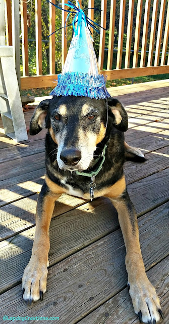 13 year old dog in birthday hat